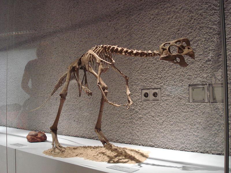 800px-Oviraptor_philoceratops
