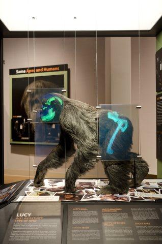 lucy-exhibit